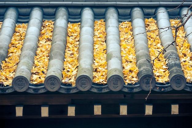 Fragment van japans tempeldak met veel gevallen ginkgobladeren