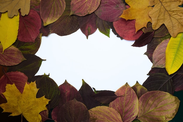 Frame gemaakt van herfstbladeren in verschillende kleuren en vormen