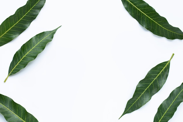 Frame gemaakt van mango. kopieer ruimte