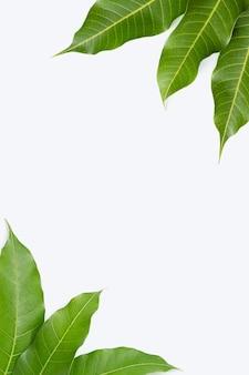 Frame gemaakt van mangobladeren op wit.