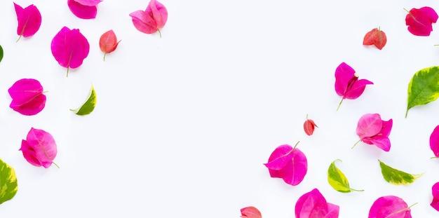 Frame gemaakt van mooie rode bougainvillea bloem met bladeren op een witte ondergrond