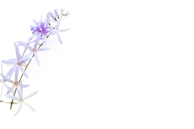Frame gemaakt van paarse bloemen op wit