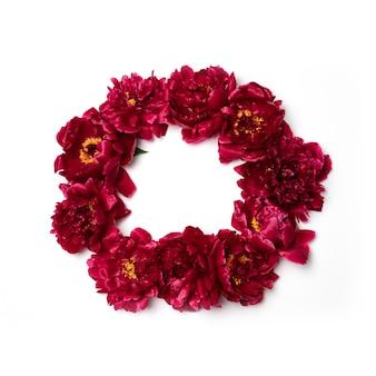 Frame gemaakt van rode pioenroos bloemen met kopie ruimte voor tekst op wit