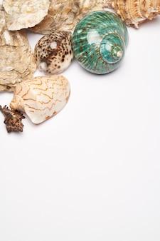 Frame gemaakt van schelpen geïsoleerd op een wit oppervlak met kopie ruimte