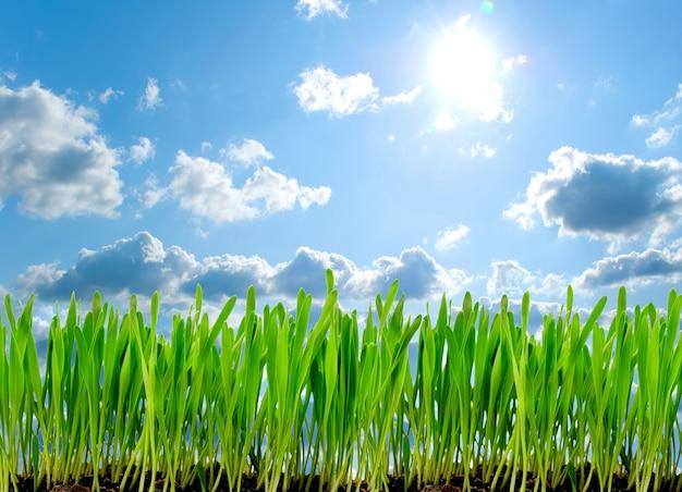 Frame van een groen gras