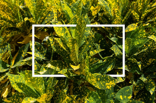 Frame van geel tropisch bladerenpatroon. natuurlijk behang