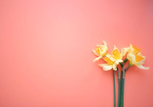 Frame van gele bloemen op een roze achtergrond