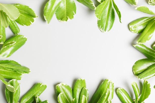 Frame van groene bladeren op een grijze achtergrond. kopie ruimte, zomer achtergrond