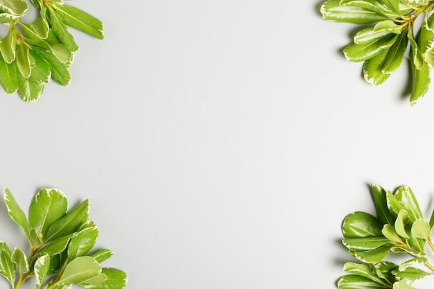 Frame van groene bladeren op een grijze achtergrond. zomer of lente achtergrond.