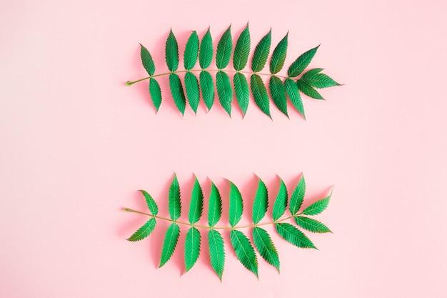 Frame van groene bladeren op roze achtergrond met copyspacetekst.