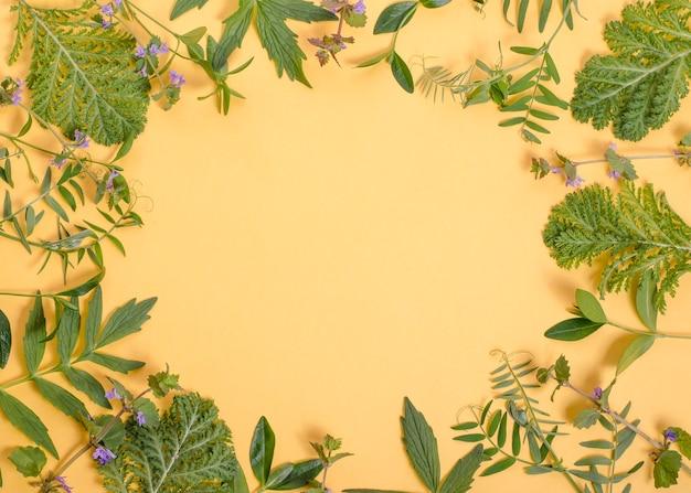 Frame van groene bladeren van planten op een geel met kopie ruimte.
