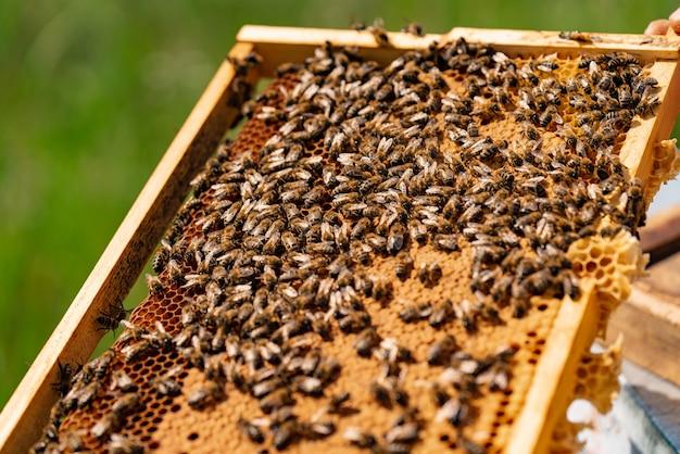 Frame van honingraat met werkende bijen en honing in de tuin.