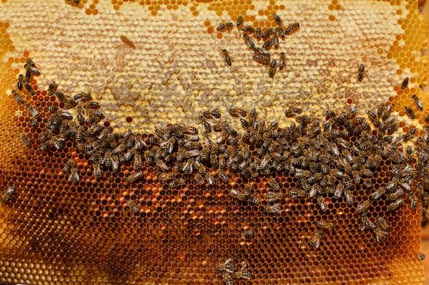 Frame voor bijenclose-up op de achtergrond van de zon.