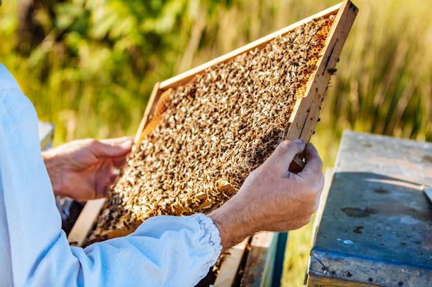 Frames van een bijenkorf