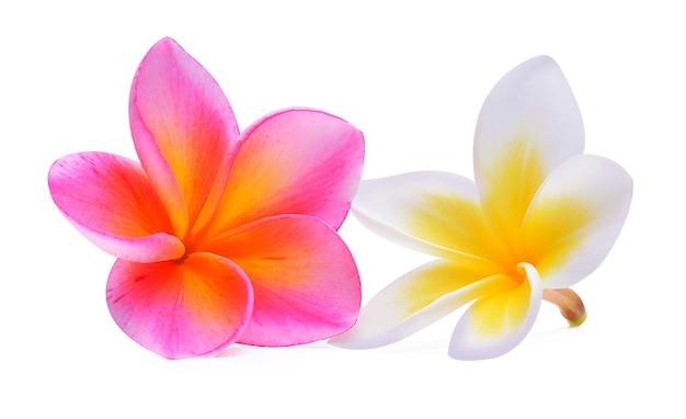 Frangipani bloem geïsoleerd op wit