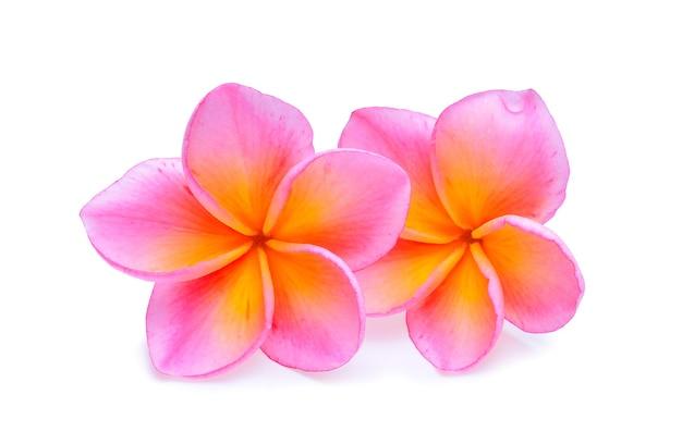 Frangipani bloem geïsoleerd witte achtergrond
