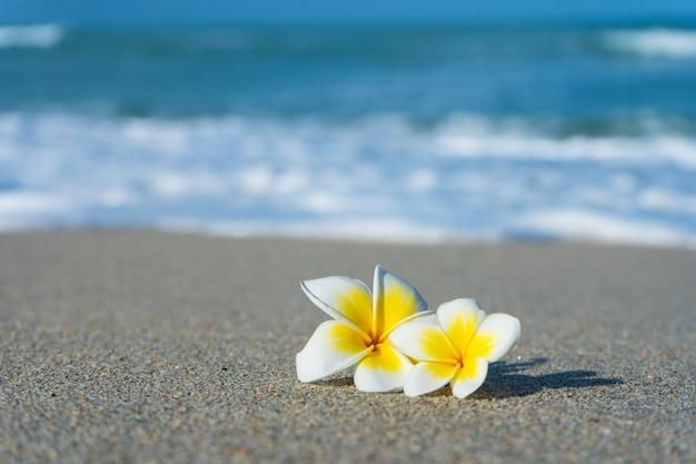 Frangipani bloem op het strand tegen de achtergrond van de zee. vakantie in de tropen. rust en ontspanning aan zee concept