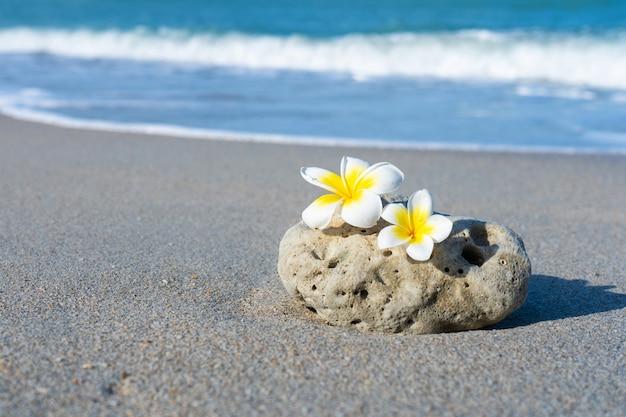 Frangipani bloemen op een steen op het strand