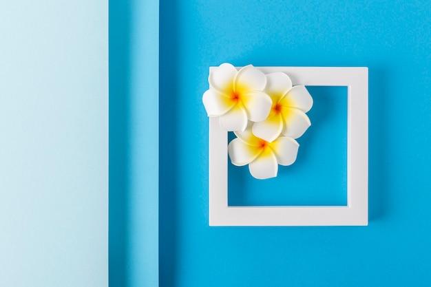 Frangipani bloemen op een vierkant podium op een gevouwen blauwe achtergrond. bovenaanzicht, plat gelegd.