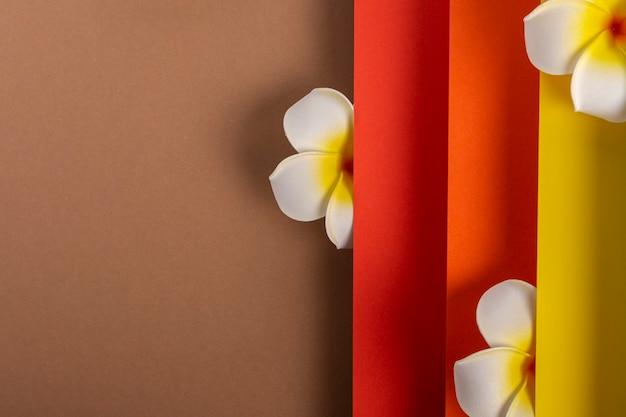 Frangipani tropische bloem op kleurrijk gevouwen papierontwerp. bovenaanzicht, plat gelegd.