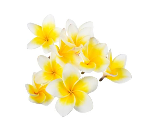 Frangipanibloem op wit