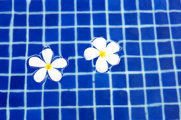 Frangipanibloemen in het zwembad. bovenaanzicht