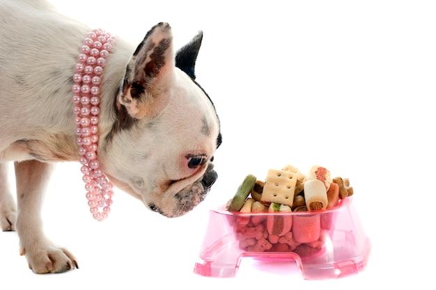 Frans buldog en voedsel voor huisdieren op wit
