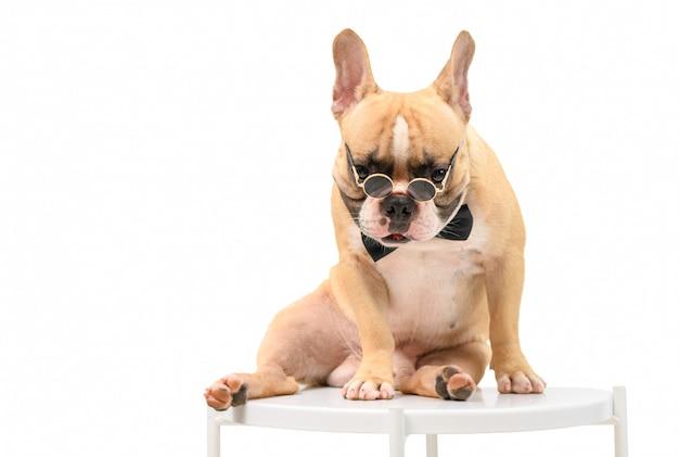 Franse buldog dragen zonnebril en zittend op tafel