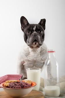 Franse buldog met ontbijtchocolade en amandelkoekjes met glas verse melk op rustiek hout