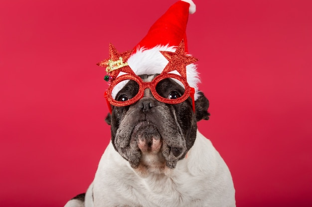 Franse bulldog met een kerstmuts en grappige zonnebril op rood
