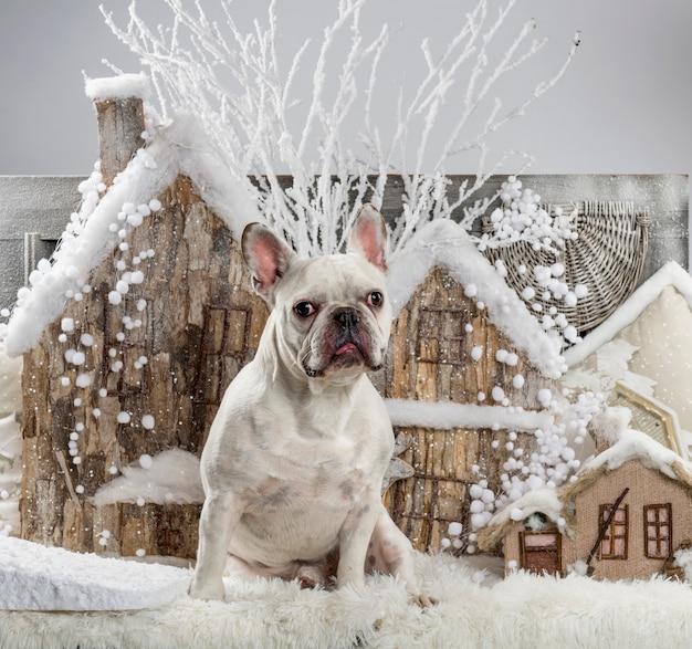 Franse bulldog voor een kerstlandschap