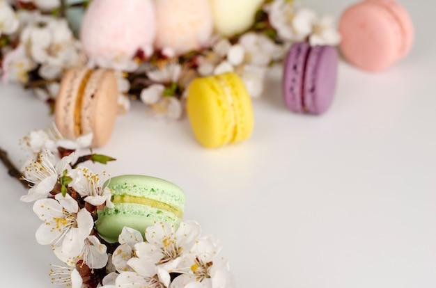 Franse kleurrijke macarons of bitterkoekjes met bloeiende abrikozenboom bloemen op licht