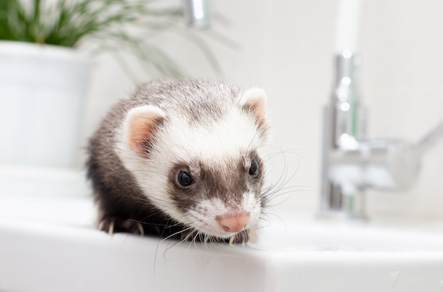 Fret (bunzing) in de badkamer