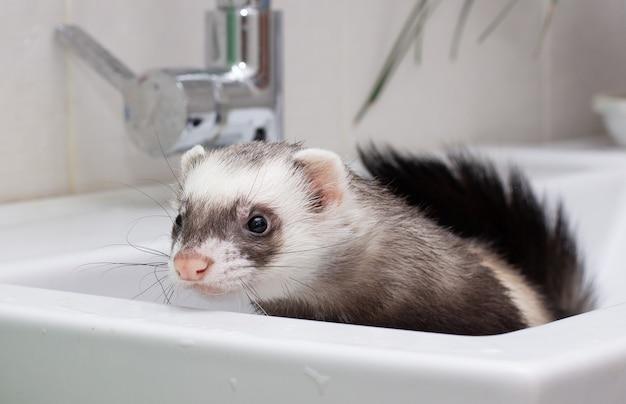 Fret (bunzing) wassen in water in de badkamer