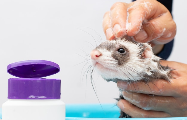 Fret krijgt een badportret