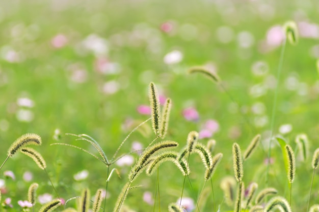 Frisheid buitentuin natuurlijke vitaliteit