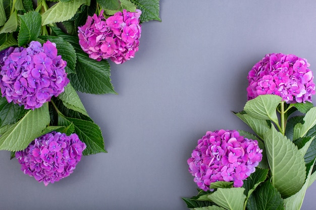 Frisse paarse hortensia's