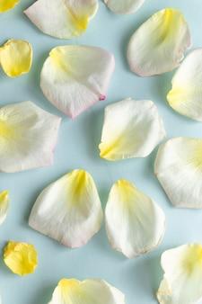 Frisse pastelkleurenachtergrond met creatief concept voor het maken van rozenblaadjes