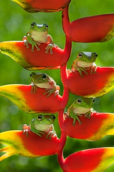 Frog family zittend op een heliconia