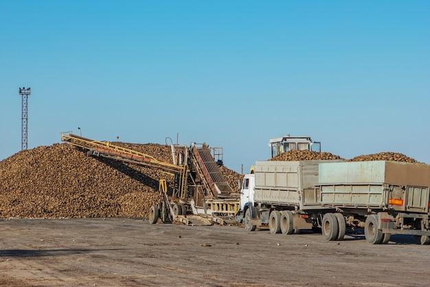 Front-end loader in actie bij het laden van suikerbieten bij een suikerfabriek