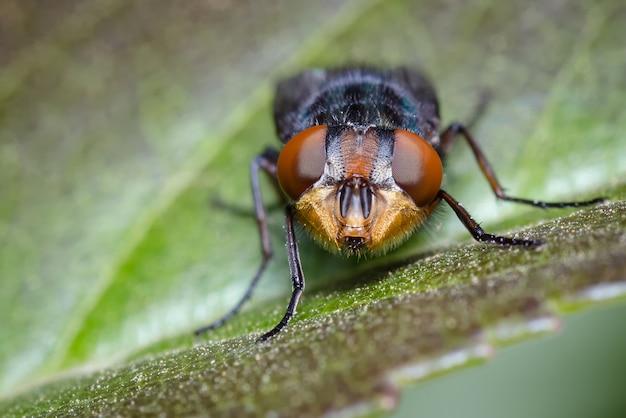 Frontale blik van een vlieg op een groen blad 1
