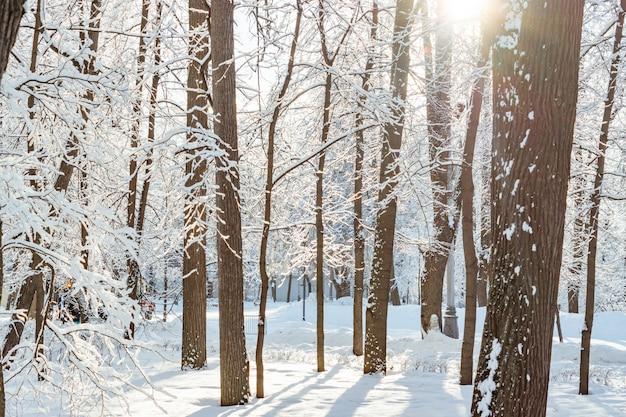 Frossty winterlandschap. bomen in sneeuw in het park