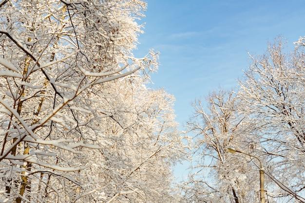 Frosty winterlandschap. bomen in de sneeuw