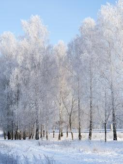 Frosty winterochtend. het mooie sneeuwlandschap van berkbomen