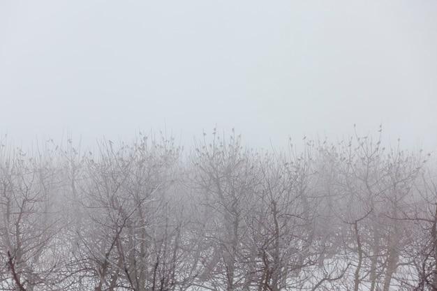 Fruitbomen zijn appelbomen in het winterseizoen