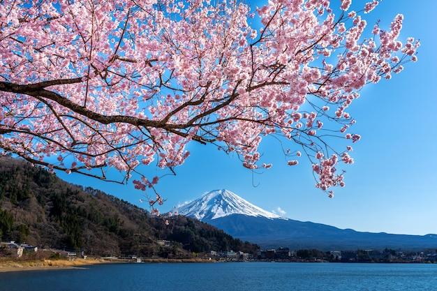 Fuji-berg en kersenbloesems in de lente, japan.
