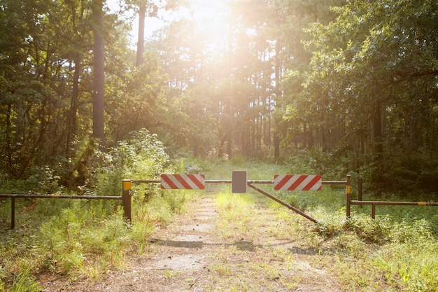 Ga niet op een gesloten manier naar het paradijs, magisch licht bos