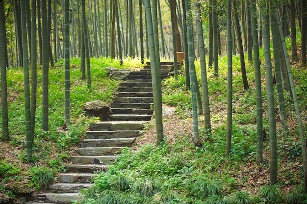 Gang met trappen in groene bamboe bos