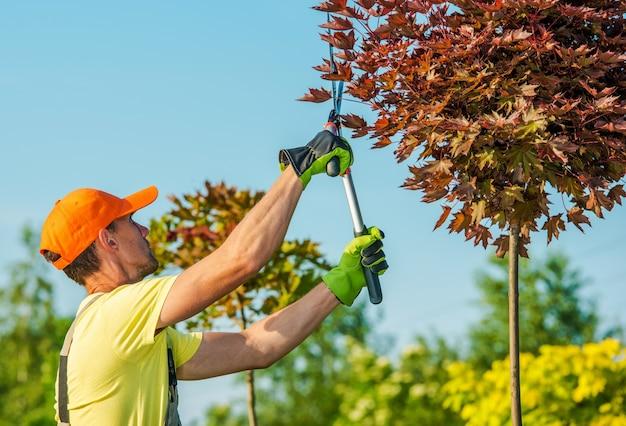Gardener shaping bomen