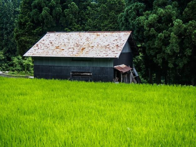 Gassho-zukurushuis, historisch dorp van shirakawa-ga in de zomer, japan